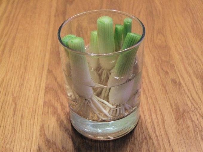 huerto-en-casa-cebolla-verde-ideas