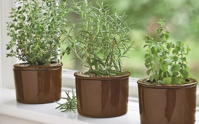 huerto-en-casa-ideas-originales-cultivar-albahaca (2)