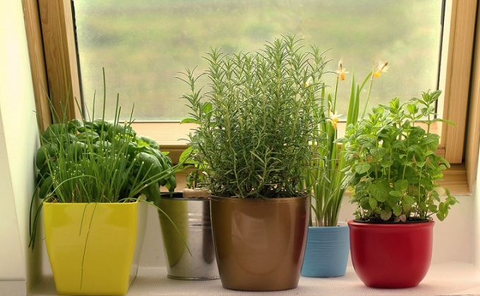 huerto-en-casa-ideas-originales-plantas
